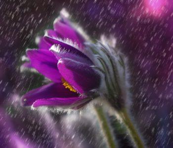 Majowy deszczyk, wiosenny wierszyk dla dzieci