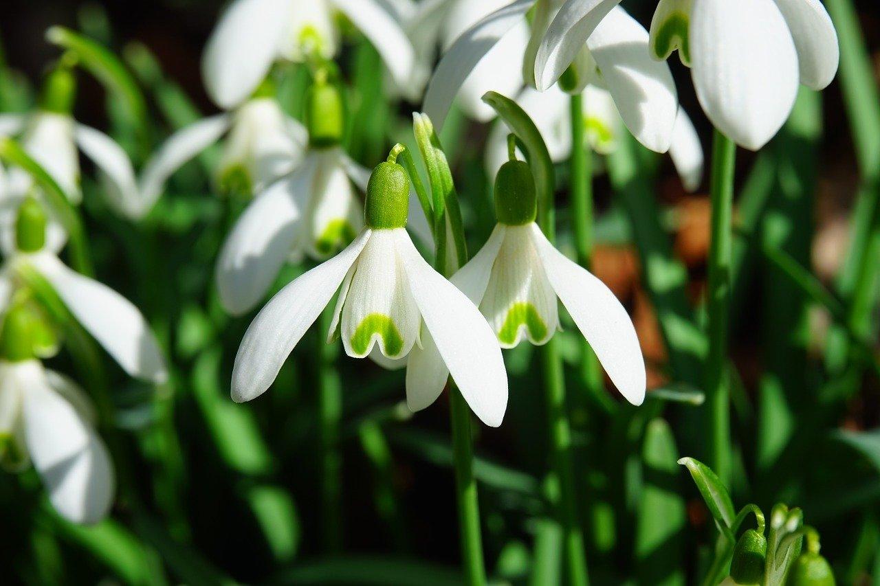 O wiośnie, wierszyk dla dzieci na powitanie wiosny
