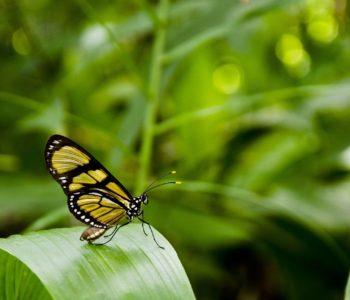 Pierwszy motylek
