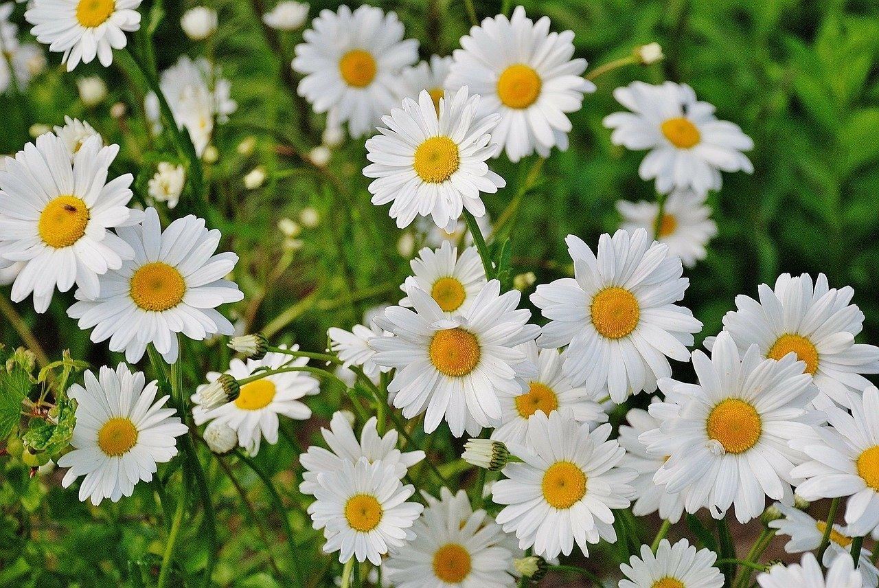 Poleczka kwiatowa, piosenka dla dzieci na powitanie wiosny, tekst i melodia