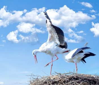 Przyloty ptaków
