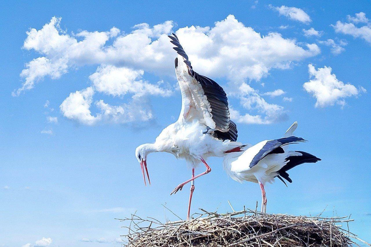 Przyloty ptaków, wierszyk dla dzieci na wiosnę
