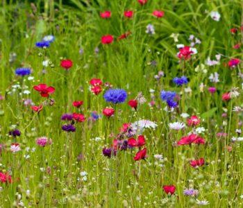 Rosną sobie kwiatki, piosenka wiosenna dla dzieci