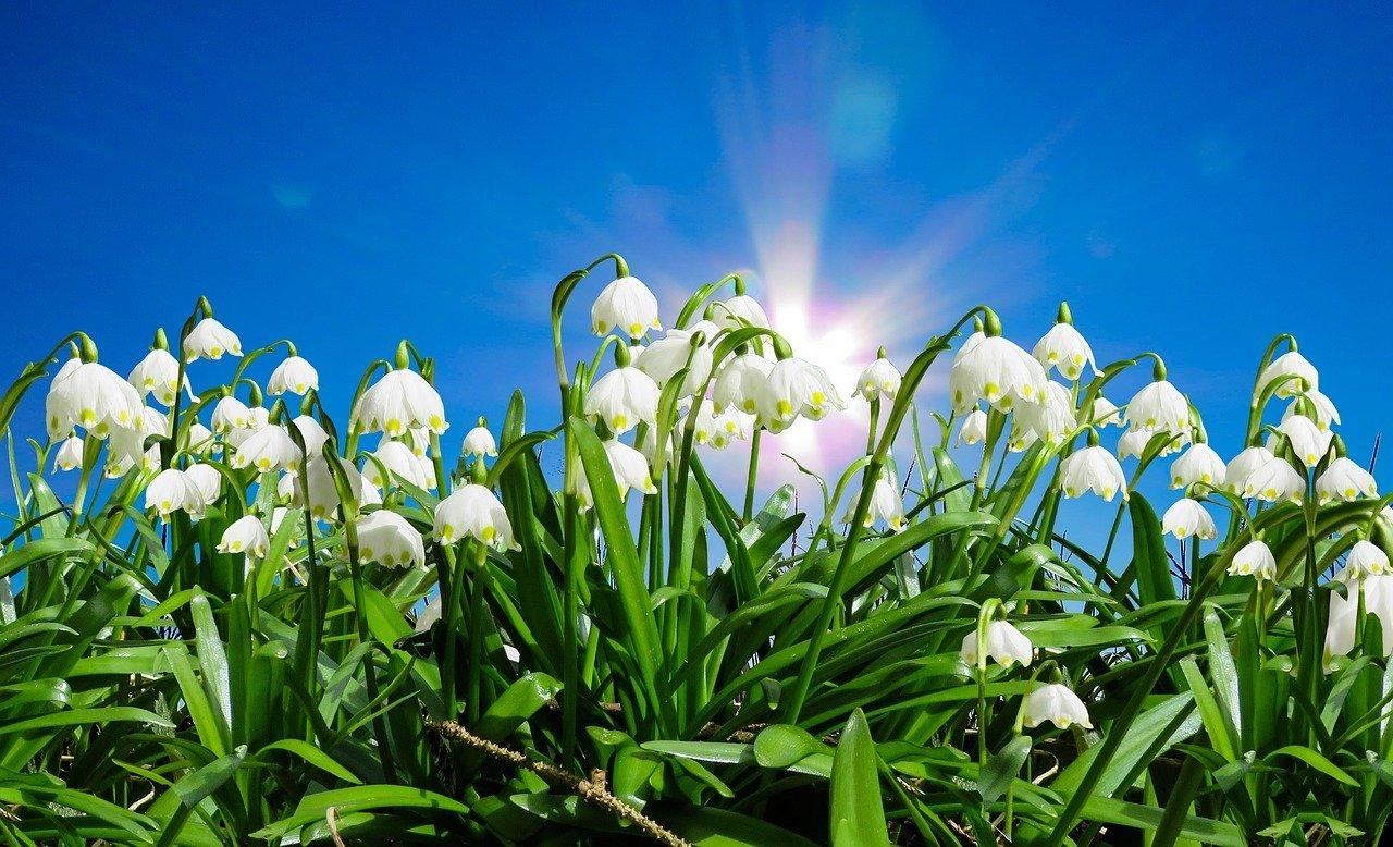 Wiosenne plany, wierszyk na powitanie wiosny