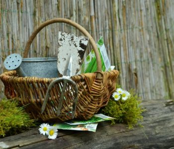 Wiosenne porządki w ogródeczku