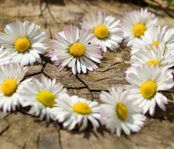 Wiosenne serduszko