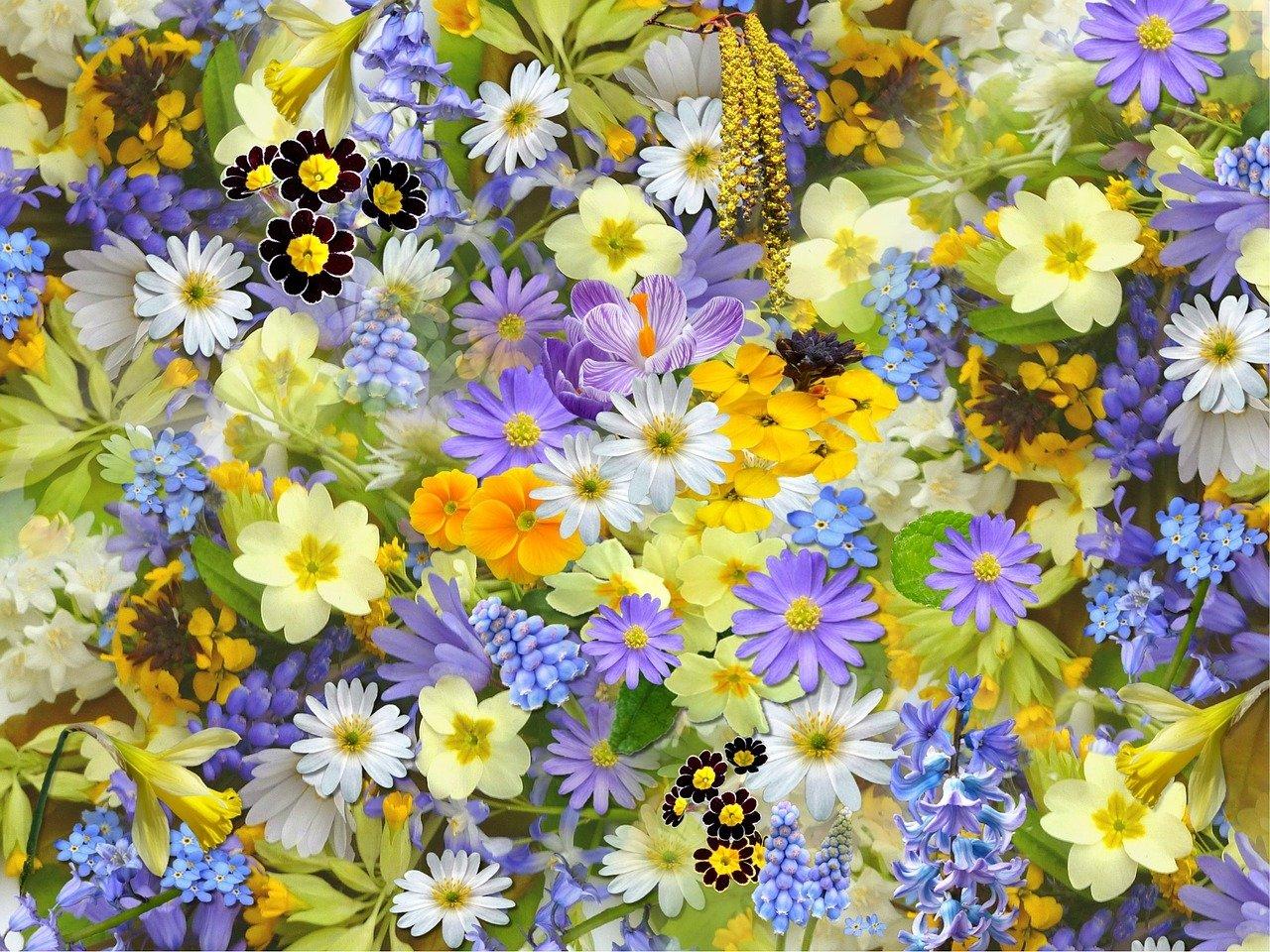 Wiosenny czarodziej, wierszyk na powitanie wiosny