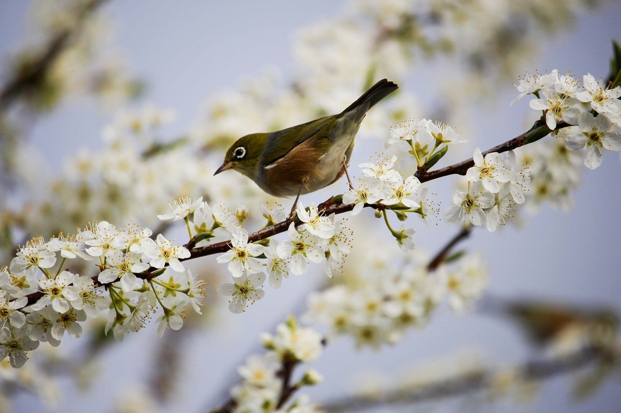 Wiosna, wierszyk dla dzieci na powitanie wiosny