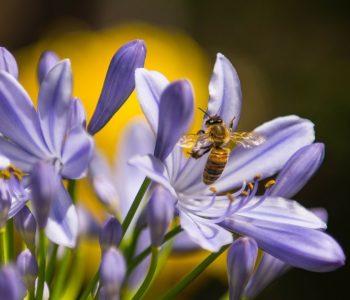Wiosna Brzechwa