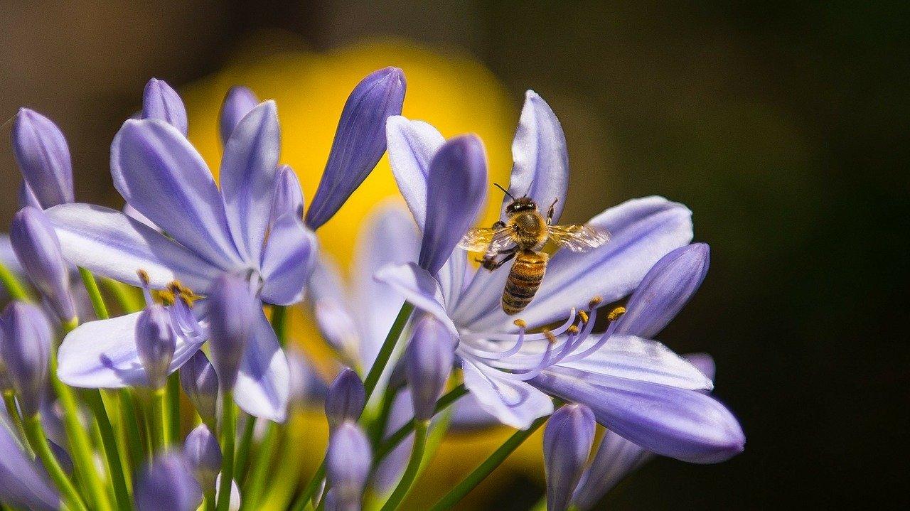 Wiosna Wierszyk Dla Dzieci Jan Brzechwa Wiosenne Wierszyki