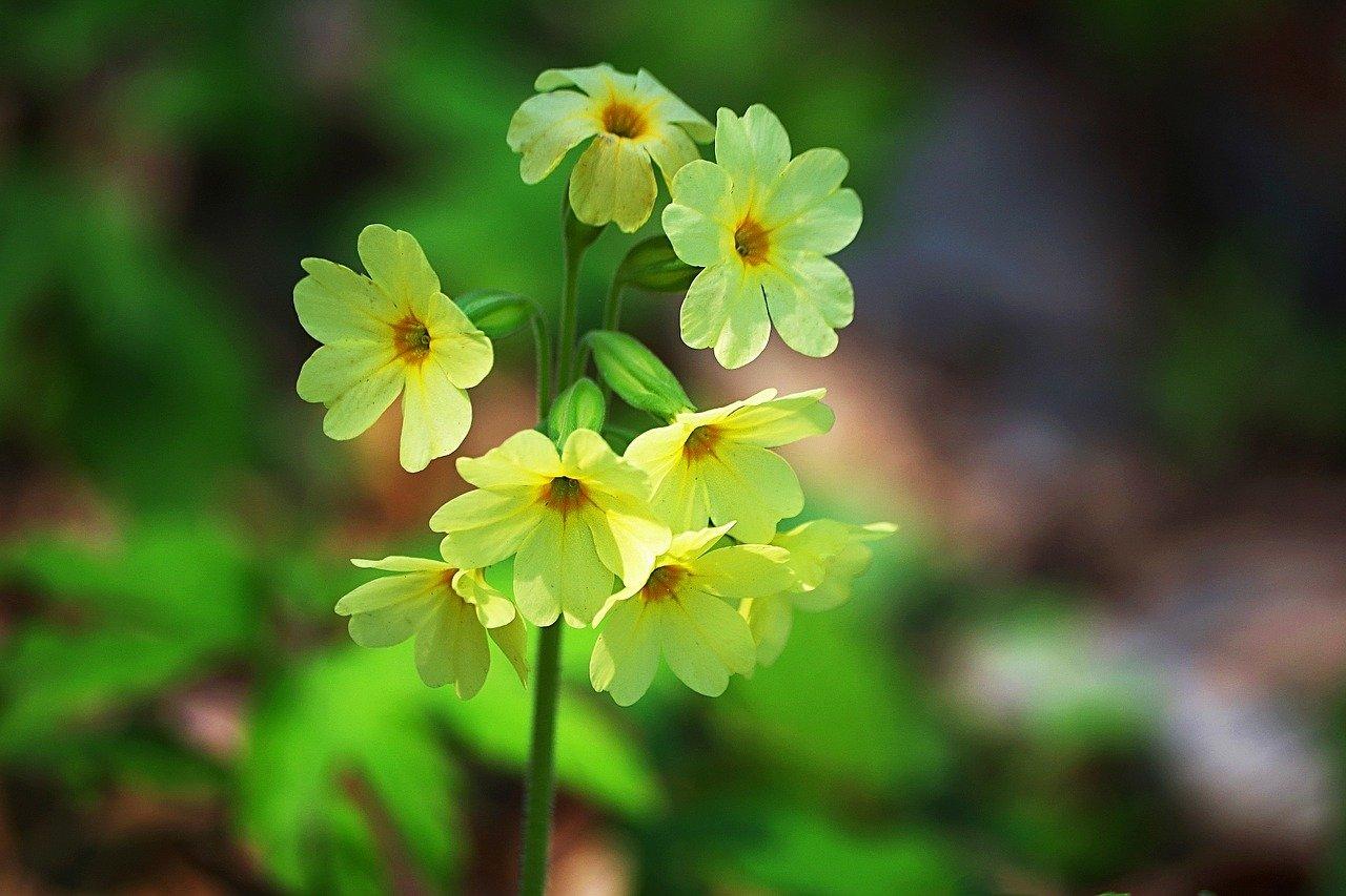 Wiosna idzie, wierszyk na powitanie wiosny