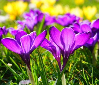 Wiosna w błękitnej sukience