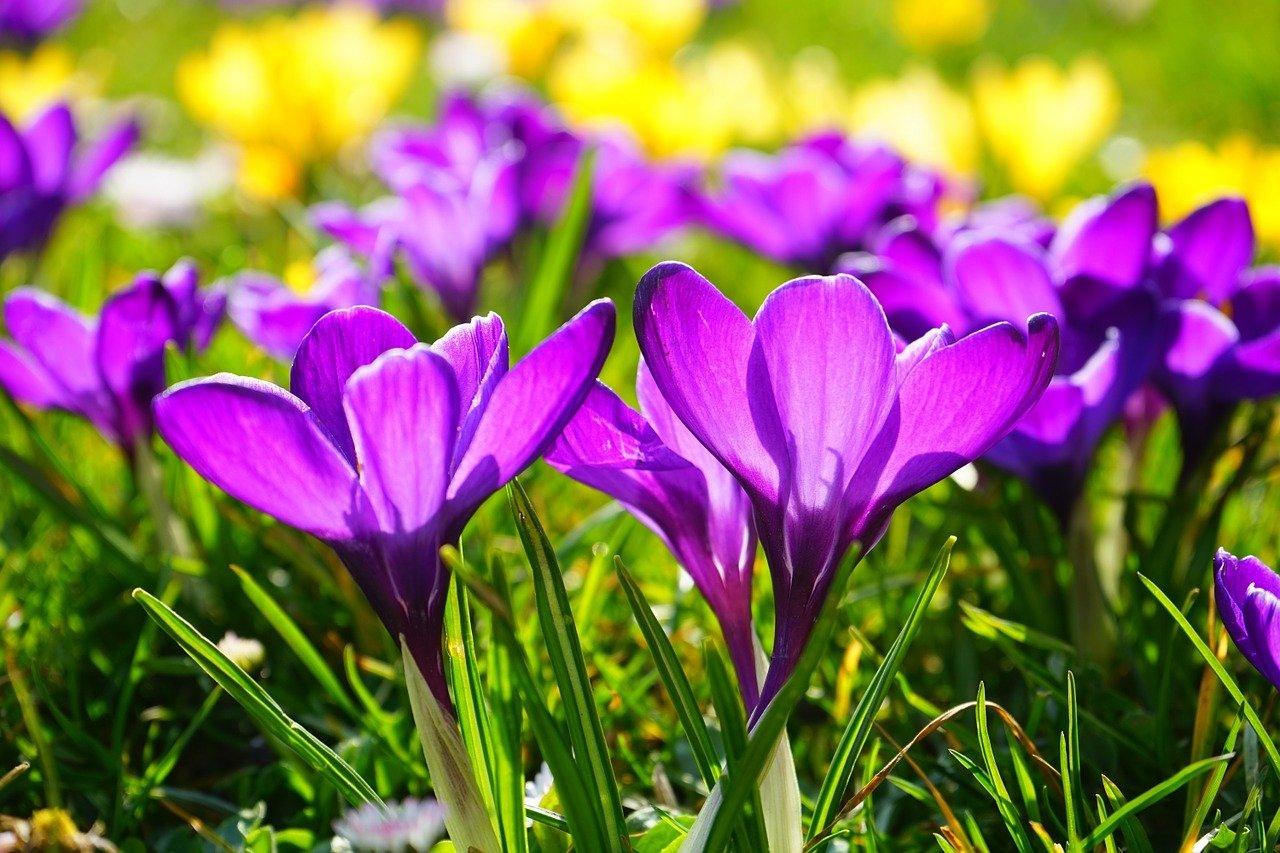 piosenka Wiosna w błękitnej sukience