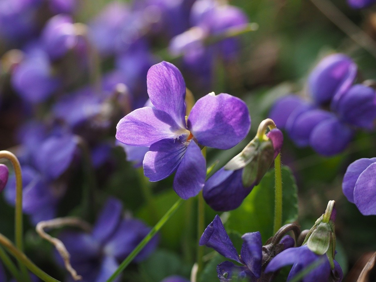 Znaki wiosny, wierszyk dla dzieci na powitanie wiosny