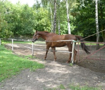 Klub Jeździecki