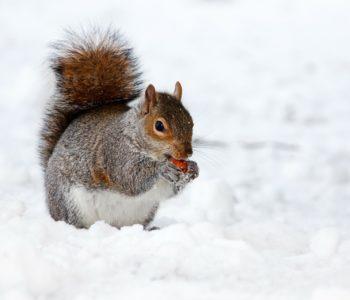 Zapasy na zimę, wierszyk dla dzieci