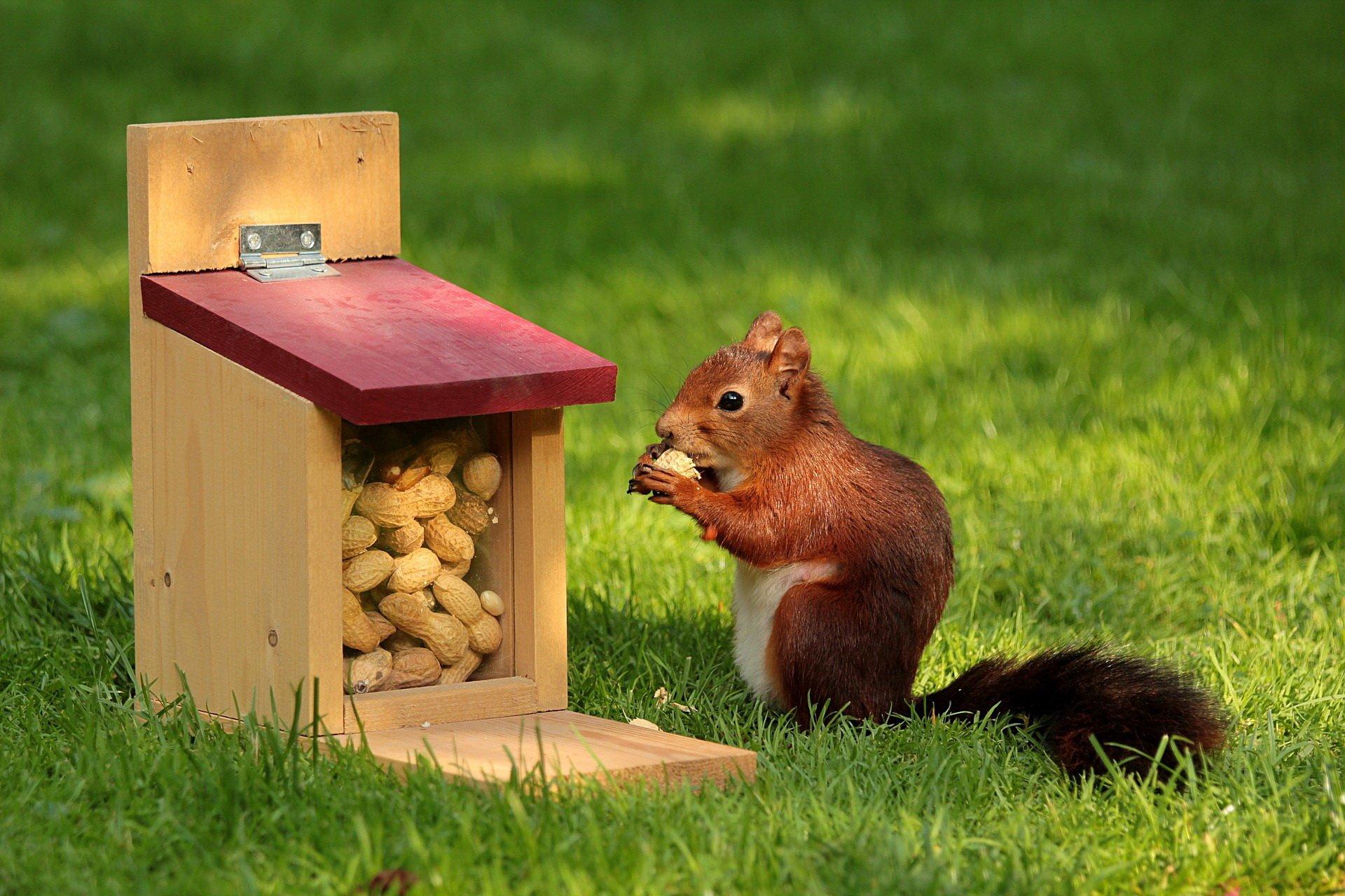 Wiewióreczko sąsiadeczko piosenki jesienne dla dzieci