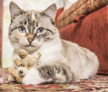 Wesoły kot Budzik
