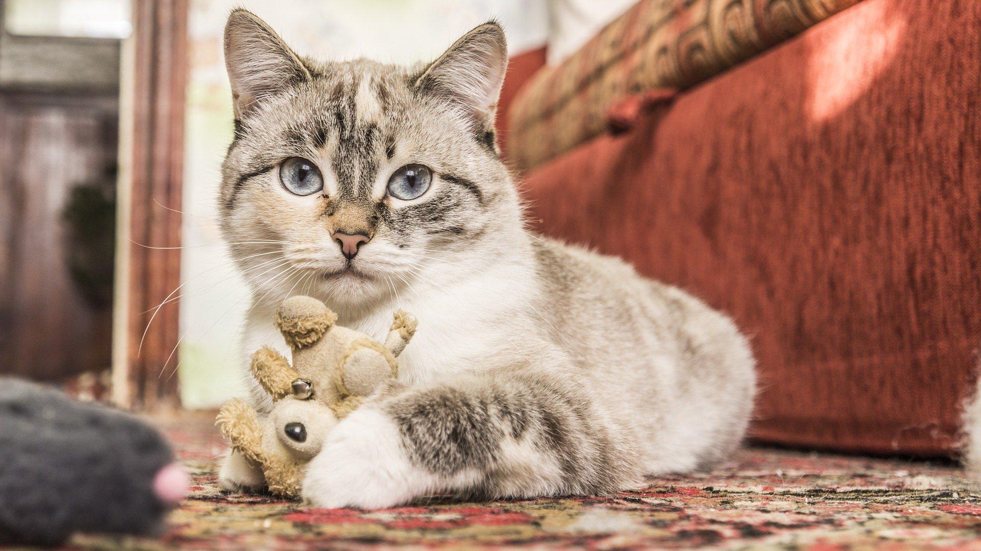 Wesoły Kot Budzik Wierszyk Dla Dzieci Wierszyki I Piosenki