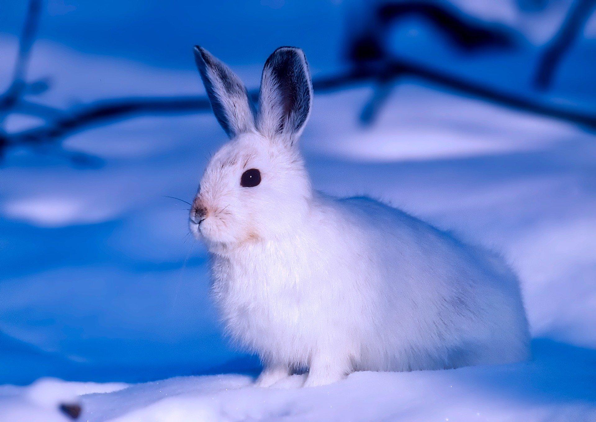 Biały walczyk, zimowa piosenka dla dzieci