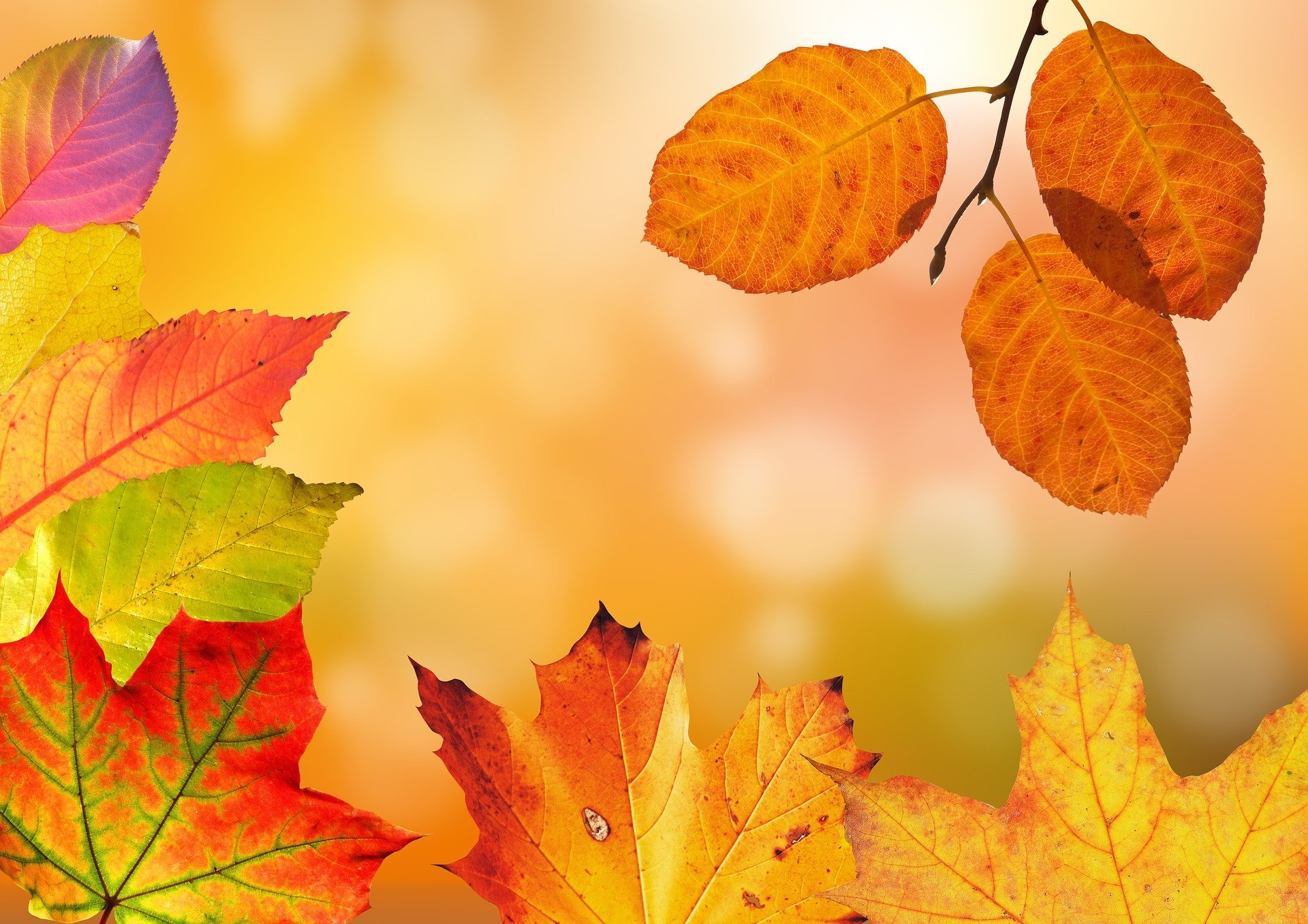 Jesienna orkiestra, wierszyk dla dzieci na jesień