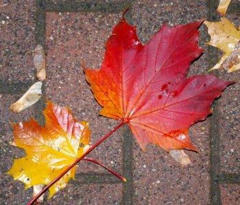 Pada deszcz piosenki na jesień