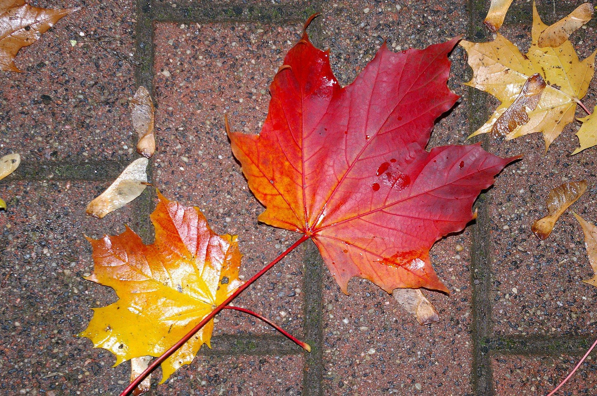 Pada deszcz piosenki dla dzieci na jesień