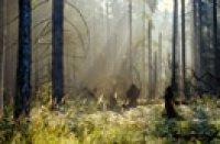 Białowieski Park Narodowy latem