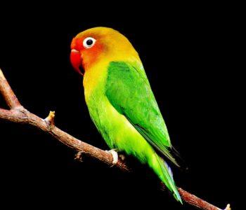 papuga wierszyk dla dzieci