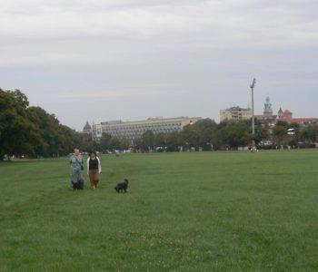 Błonia (ul.Piastowska)