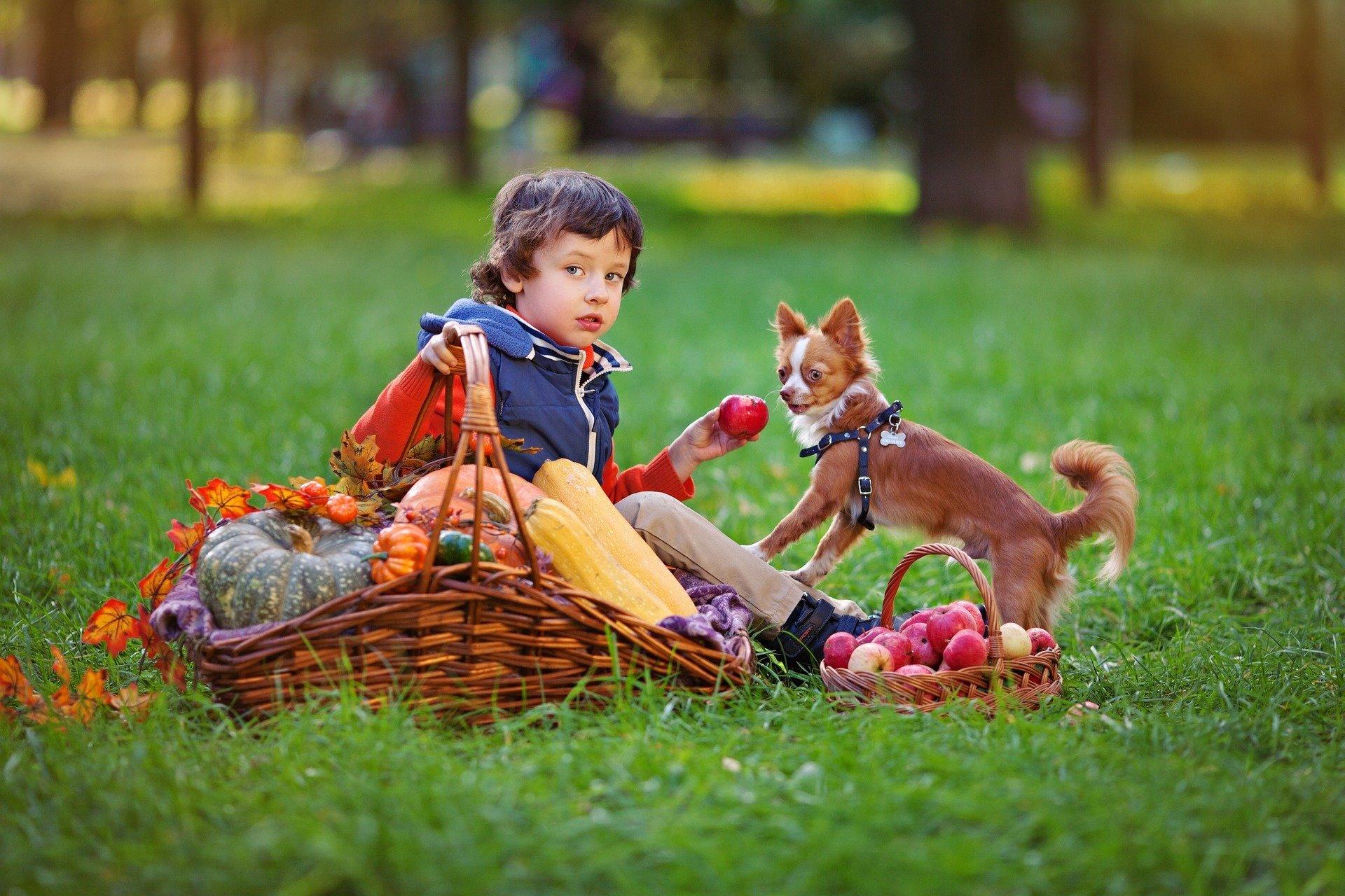 Psia piosenka, piosenka dla dzieci o jesieni tekst i melodia