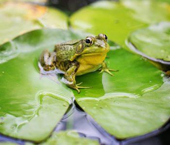 Kołysanka dla żaby Chotomska