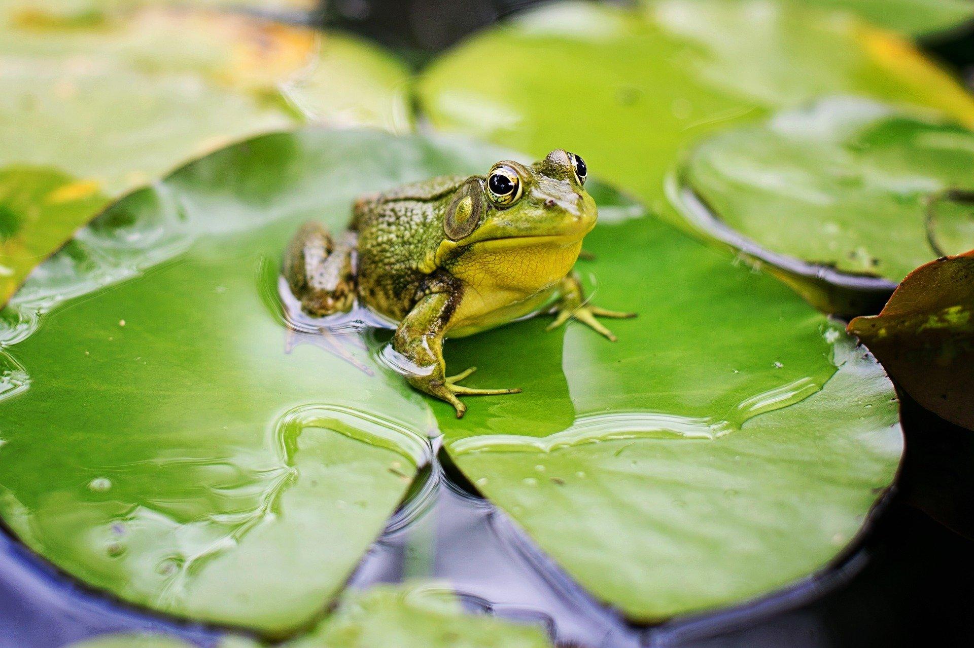 Kołysanka dla żaby