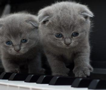 Aaa kotki dwa kołysanka dla dzieci tekst i melodia