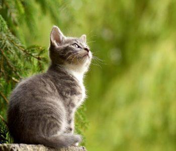Kocio Koteczki, wierszyk dla dzieci o kotku