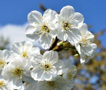 Wiosenny mazurek wierszyk dla dzieci na powitanie wiosny