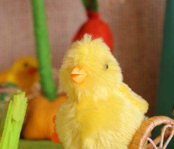kurczaczek wielkanoc