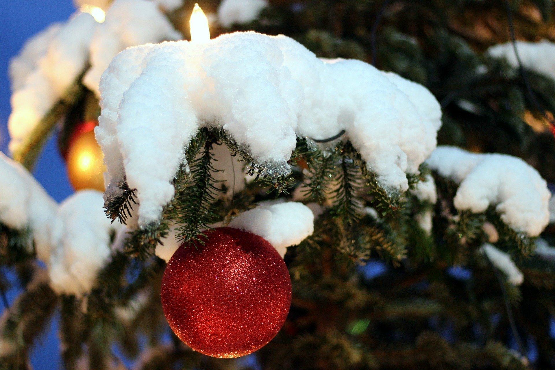 Choinka stała pod śniegiem piosenka dla dzieci tekst i melodia