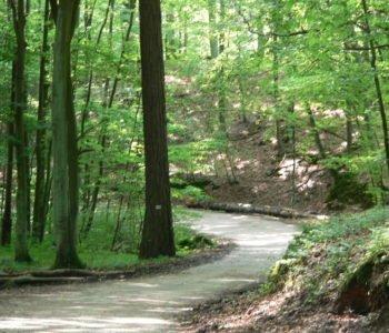 Leśne ścieżki