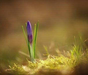 Poprzez ziemię idzie wiosna