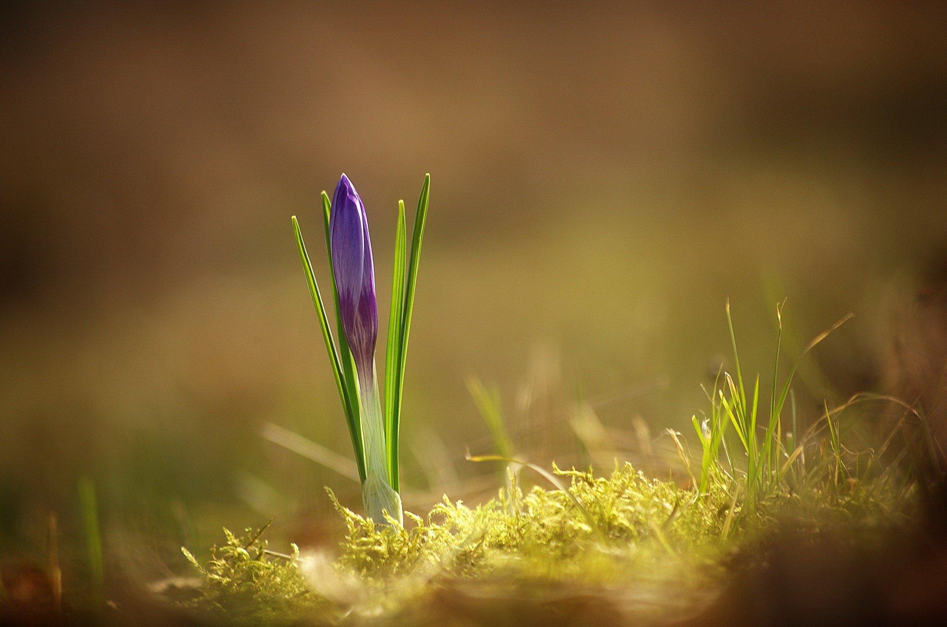 idzie wiosna piosenka dla dzieci na powitanie wiosny