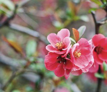 czerwone kwiaty we wrocławskim ogrodzie japońskim