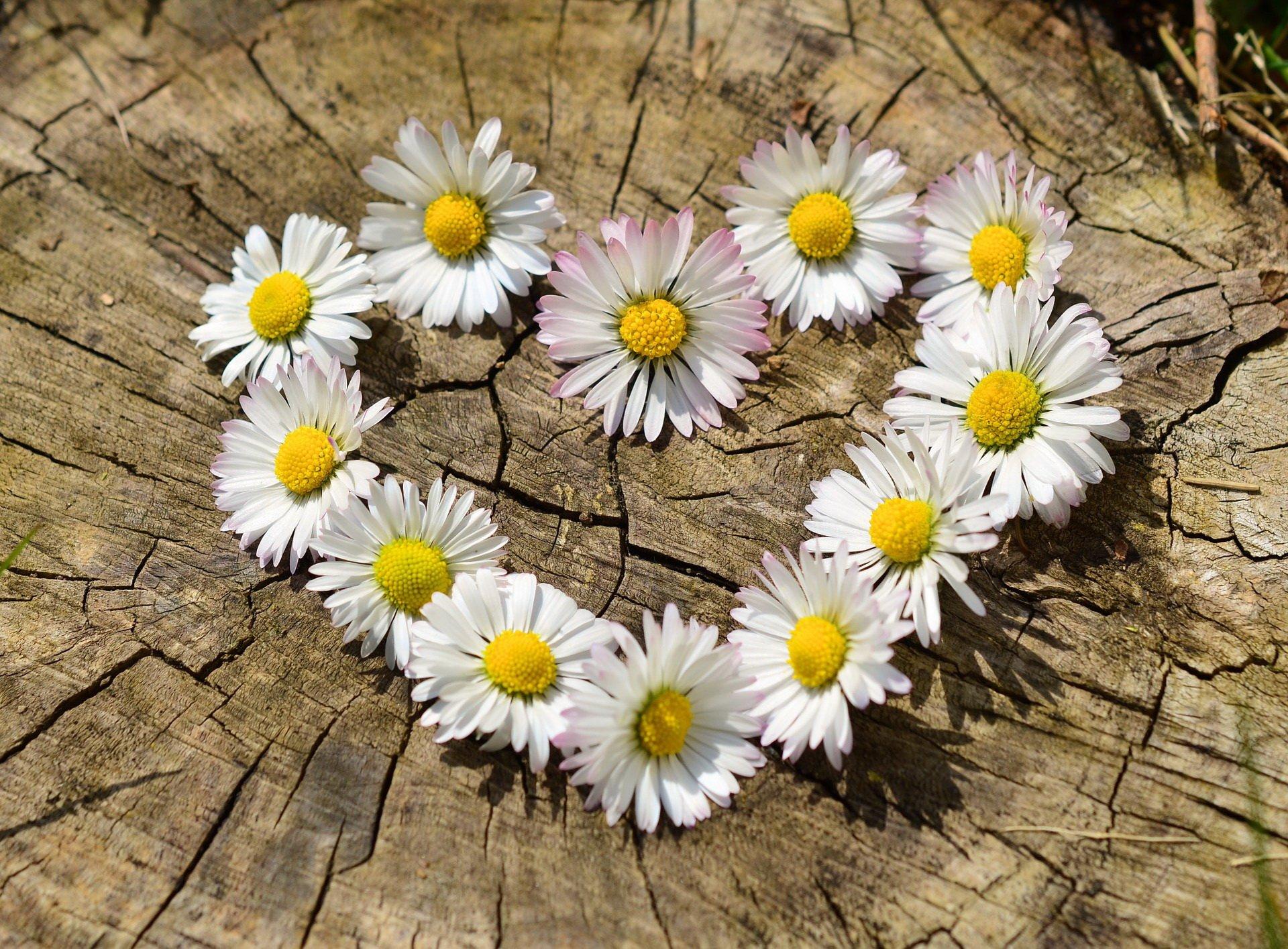 Kwiaty dla mamy wiersz na dzień matki