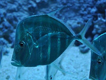 Ryba w Akwarium Gdyńskim