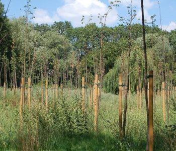 Z Botanicznej do lasu