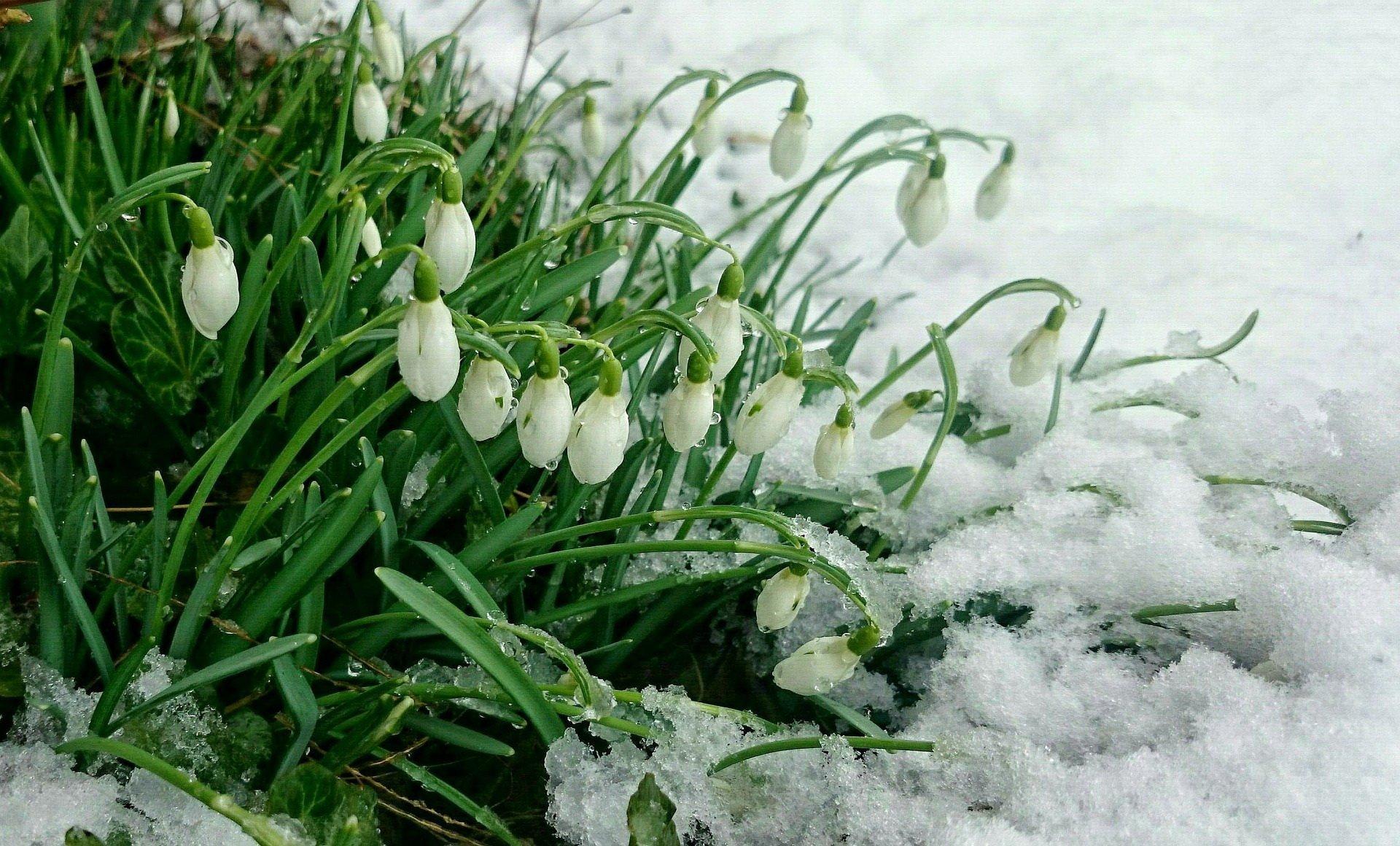 Przedwiośnie Wierszyk Dla Dzieci Na Powitanie Wiosny