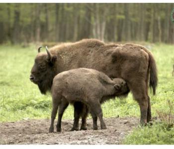 Rezerwat Pokazowy Zwierząt