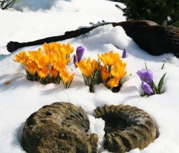 Zgniewała się zima, piosenka dla dzieci na powitanie wiosny