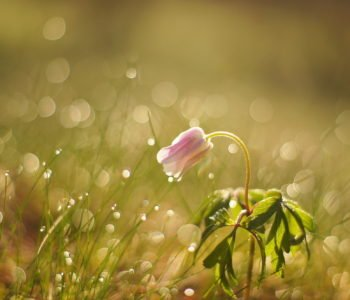 Rosną sobie kwiatki