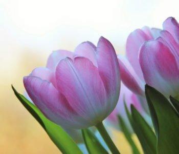 Dziś przynoszę ci kwiaty